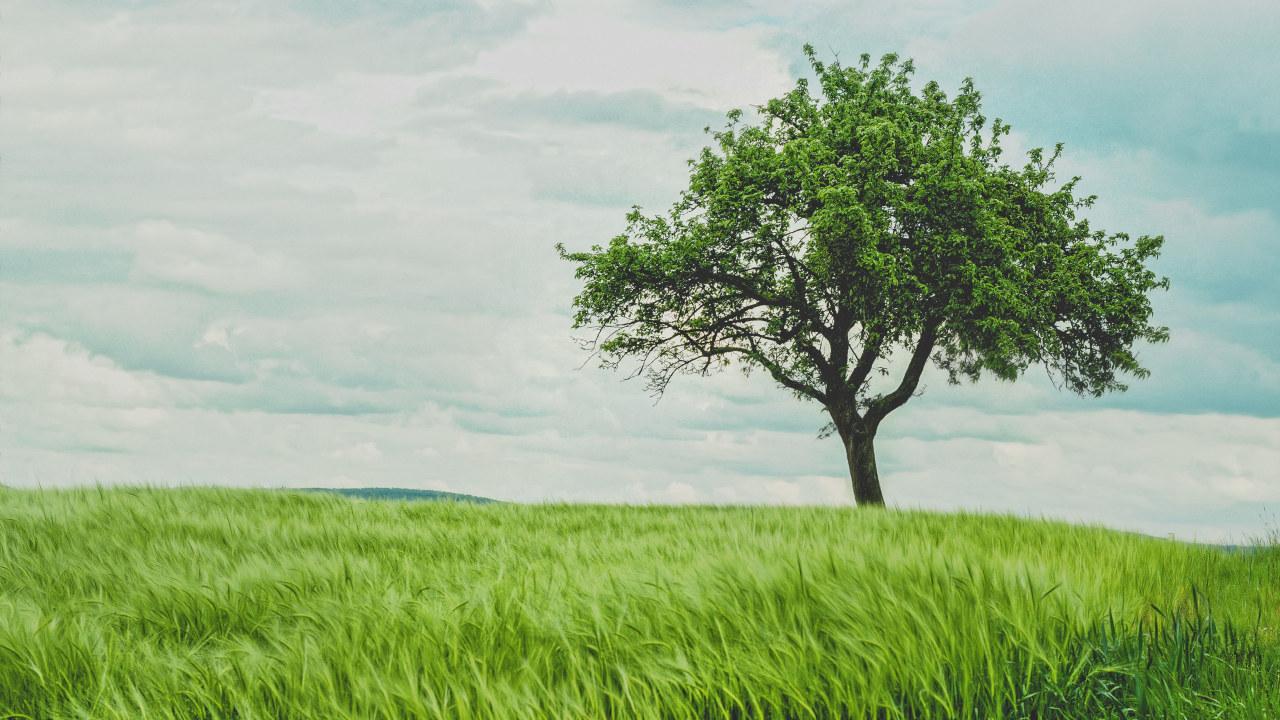 Bildet av et tre på gresskledd eng
