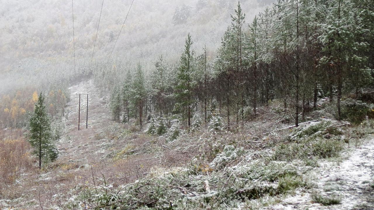 Nettsak - Tynning av skog skal gi færre strømbrudd