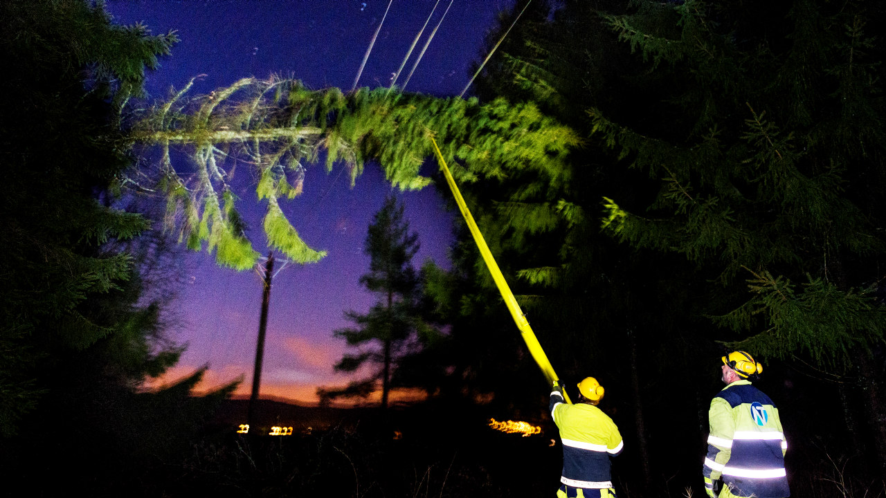 To menn prøver å få ned et grantre som har blåst ned over strømnettet, Foto